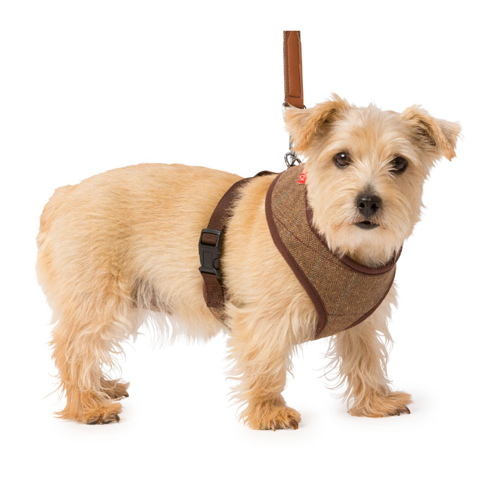 House Of Paws Brown Tweed Memory Foam Harness M              Gift
